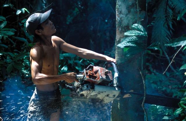 1999_07_Indonesia_Gunung_Leuser_Logging_01 small