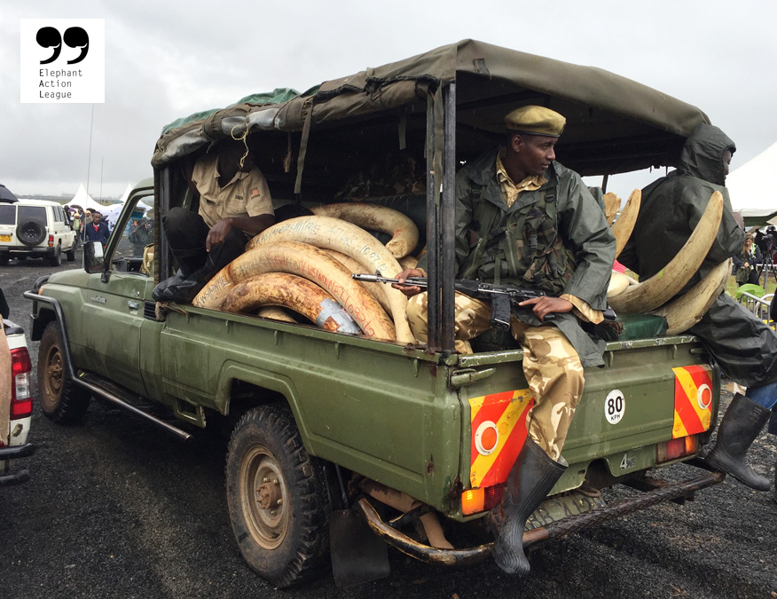 Seized ivory in Kenya. ©Elephant Action League (EAL)