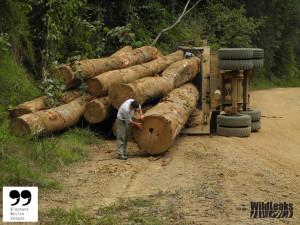 Logging01