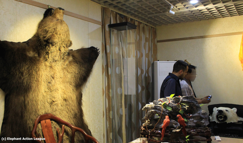 Wildlife trafficker in China. ©Elephant Action League (EAL)